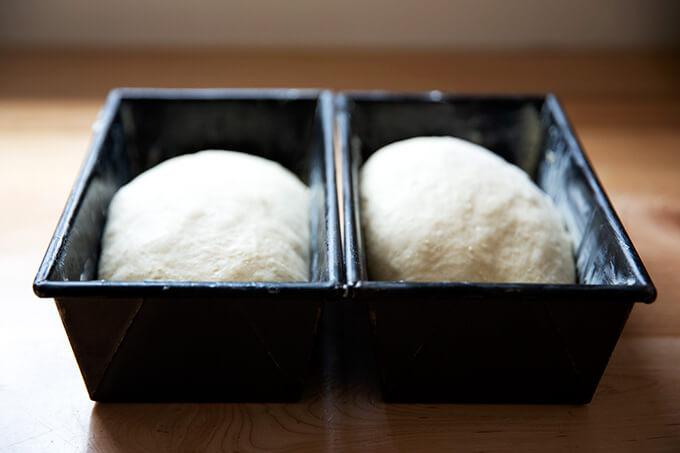 Masa de brioche en moldes para pan.