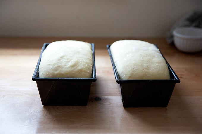 Dos moldes para pan rellenos de masa de brioche listos para el horno.