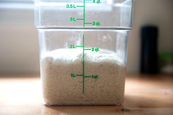 Un contenedor de masa madre que ha subido un 50% en volumen.
