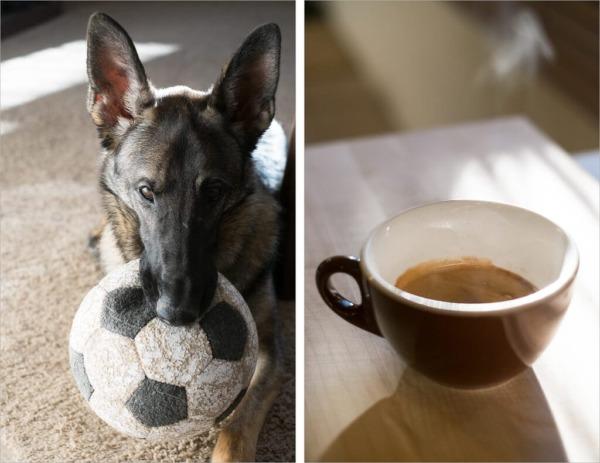 Mi pastor alemán Arya y una taza de espresso Intelligentsia