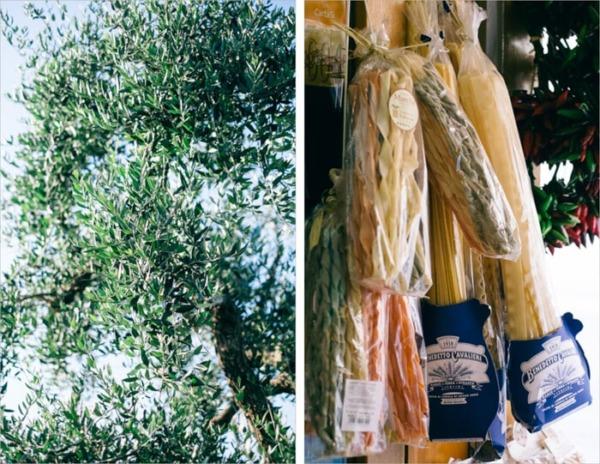 Olivo y pasta del sur de Italia